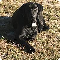 Adopt A Pet :: Ripley - West Springfield, MA
