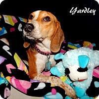 Adopt A Pet :: Yardley - Washington, PA