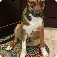 Adopt A Pet :: Pico - Spring, TX