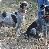 Adopt A Pet :: Nick & Noelle - Greenback, TN