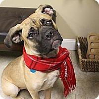 Adopt A Pet :: Artey - Medina, OH