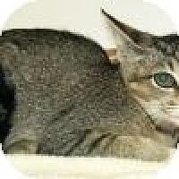 Adopt A Pet :: Ninna - Powell, OH