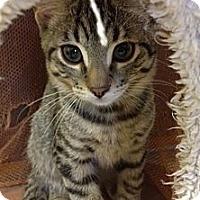 Adopt A Pet :: Esteban - Byron Center, MI