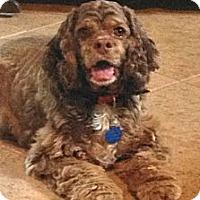 Adopt A Pet :: Sadie - Sugarland, TX