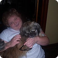 Adopt A Pet :: Hershey - Portland, ME
