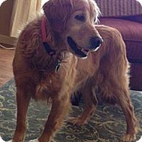 Adopt A Pet :: Missy - Minnetonka, MN