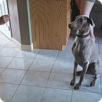 Adopt A Pet :: Tucker - Sinking Spring, PA