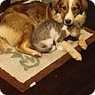 Adopt A Pet :: Rata