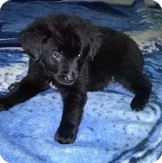 Carlsbad Dog Rescue