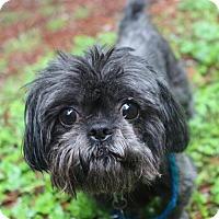 Adopt A Pet :: Nickenbocker - Smyrna, GA