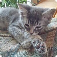 Adopt A Pet :: Neil - North Highlands, CA
