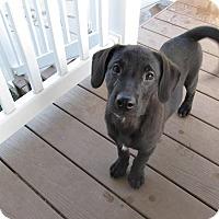 Adopt A Pet :: Tigger - Sinking Spring, PA
