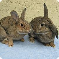 Adopt A Pet :: Graham Cracker & Smores - Bonita, CA