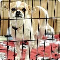 Adopt A Pet :: Cornelia - Gainesville, FL
