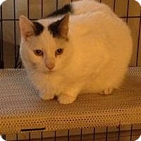 Adopt A Pet :: Petey - Newark, DE
