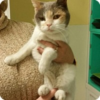 Adopt A Pet :: Cheer - Marble, NC