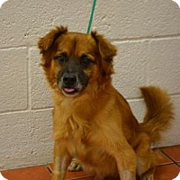 Adopt A Pet :: Wolf - Miami, FL