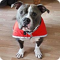 Adopt A Pet :: Bam Bam - Chicago, IL