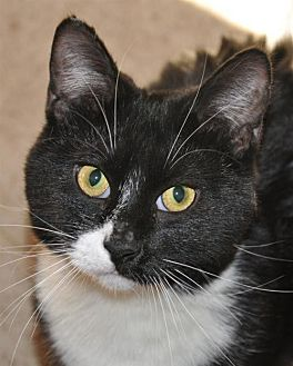 Domestic Mediumhair Cat for adoption in Wagoner, Oklahoma - Gypsie