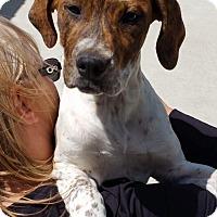 Adopt A Pet :: CLEMENTINE - Gustine, CA