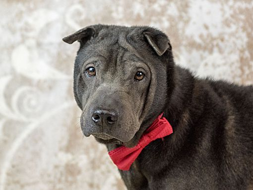 Free Dog Adoption Orlando Fl