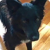 Adopt A Pet :: Acie Fay - Thompson's Station, TN