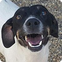 Adopt A Pet :: Sadie - Bloomington, IL