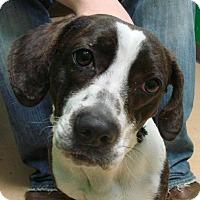 Adopt A Pet :: Bunny - Erwin, TN