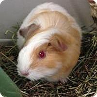 Adopt A Pet :: Tater - Quilcene, WA