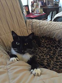 Domestic Shorthair Cat for adoption in Harbor City, California - Tuxedo