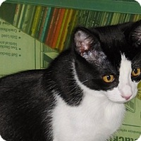 Adopt A Pet :: Romeo - Fremont, CA