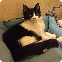 Adopt A Pet :: Wonder Twin Zan - Tucson, AZ