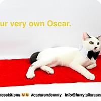 Adopt A Pet :: Oscar - Pacific Palisades, CA
