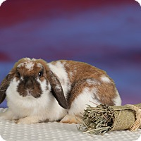 Adopt A Pet :: Dory - Marietta, GA