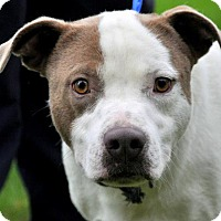 Adopt A Pet :: NORM - Standish, MI