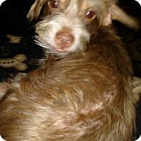 Adopt A Pet :: Rusty - Laingsburg, MI