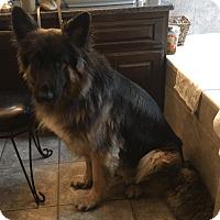 Adopt A Pet :: Mazerati (Mazi)-Referral - Dripping Springs, TX