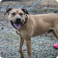 Adopt A Pet :: Goliath *WILL DIE 2-20-17 - Columbia, TN