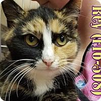 Adopt A Pet :: Rey - Tiffin, OH