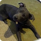 Adopt A Pet :: Wiggins