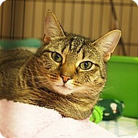 Adopt A Pet :: Corrine - Ocean City, NJ