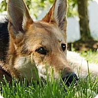 Adopt A Pet :: Harmony - Wayland, MA