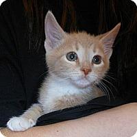 Adopt A Pet :: William - Reston, VA