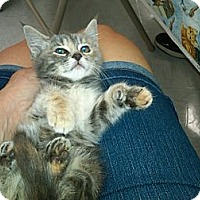 Adopt A Pet :: Heather - Sterling Hgts, MI