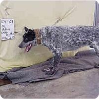Adopt A Pet :: Adam/Pending - Zanesville, OH