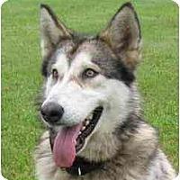 Adopt A Pet :: Orrin - Belleville, MI