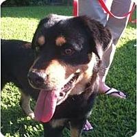 Adopt A Pet :: Gatlin - Arlington, TX