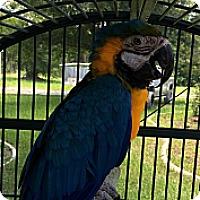 Adopt A Pet :: Morris - Punta Gorda, FL