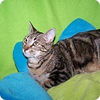 Adopt A Pet :: Tortney (slk) - Orlando, FL