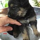 Adopt A Pet :: 4483